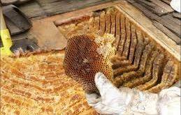 کندو عسل طبیعی سبلان