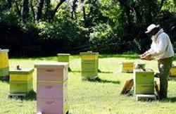 عرضه انواع کندو عسل اهواز