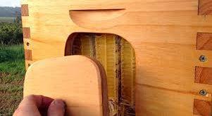 فروش کندو عسل چوبی