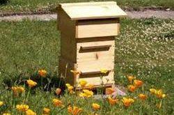 فروش انواع کندو عسل