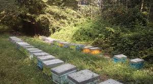 مشاوره فروش کندو عسل
