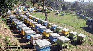 فروش کندو عسل خوانسار