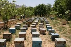 خریدار کندو زنبورداری