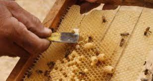 کندو عسل صادراتی