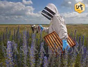 خرید اینترنتی لوازم زنبورداری