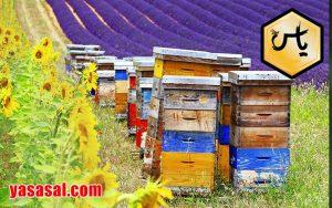 خرید اینترنتی کندوی عسل