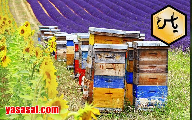 کندوی چوبی زنبورعسل