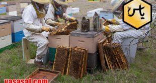 توزیع لوازم زنبورداری