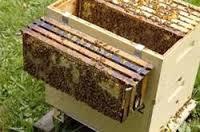 کندوی زنبورعسل چوبی