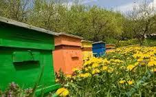کلیه لوازم زنبورداری