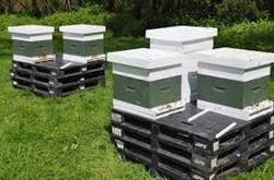 قیمت خرید کندو عسل