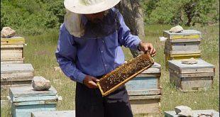 خرید کندوی عسل
