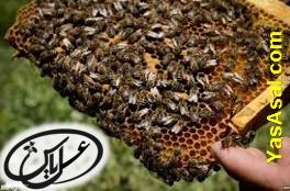 معرفی انواع لوازم زنبورداری