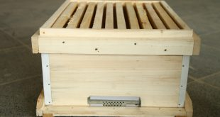 انواع کندوی عسل