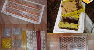 قیمت کندوی زنبورداری