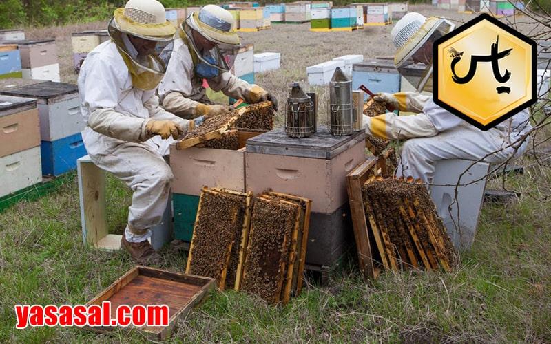 قیمت لوازم زنبور داری