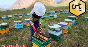 خریدکندوی عسل